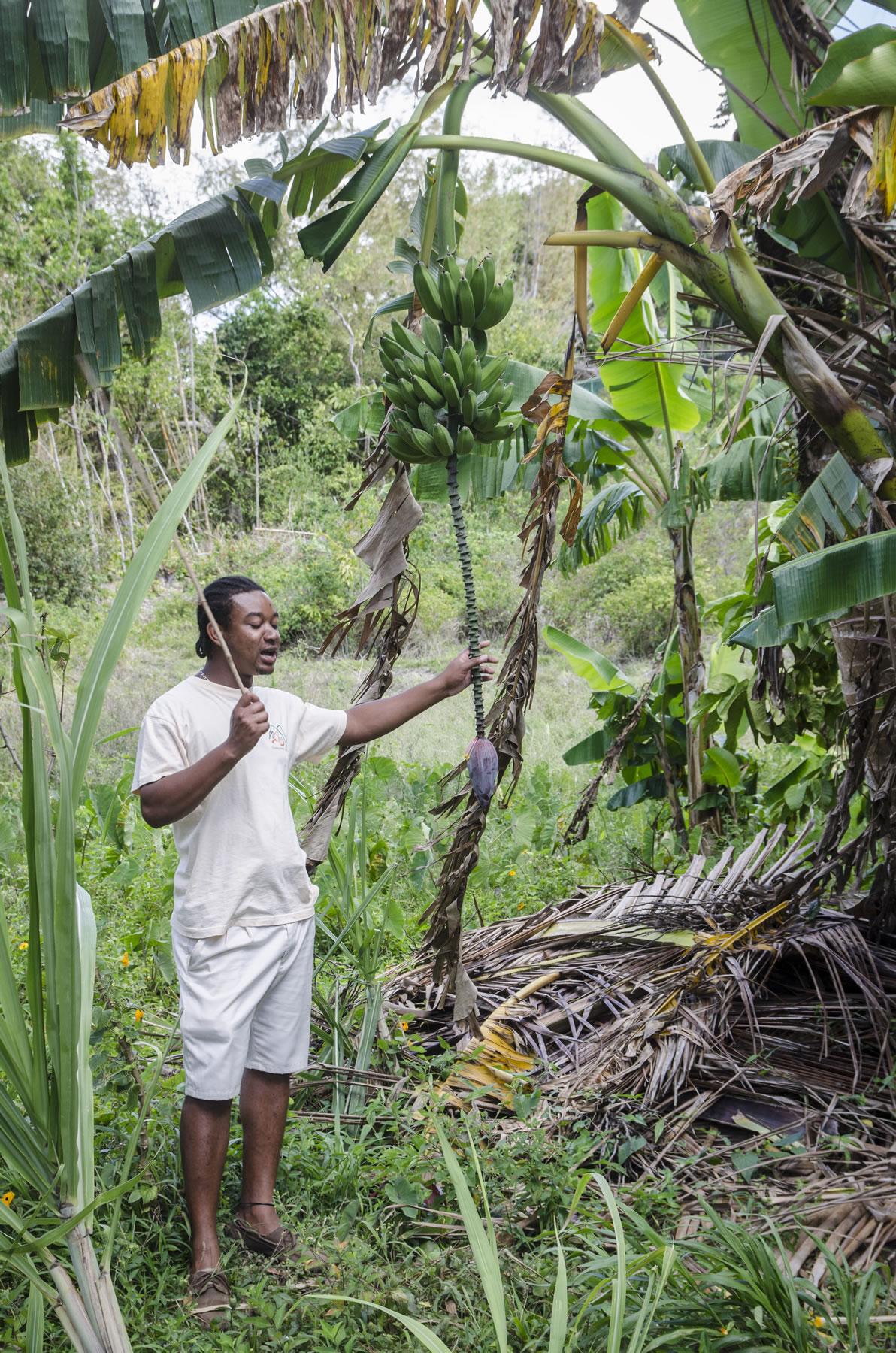 St Lucia garden tour guide
